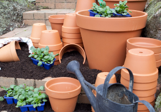 Italian Pots and seedlings